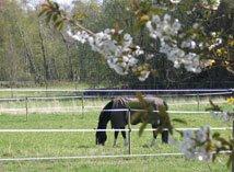 Hästhage på våren