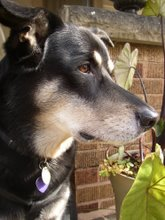 Garden Assistant: Coco