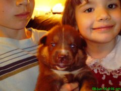Andrew & kayleigh holding a pup from a litter we fostered at 2 weeks old.