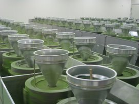 Matcha Facility