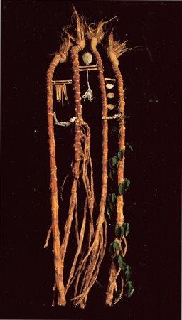 Kale Roots
