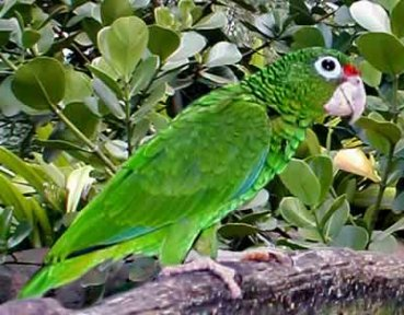 Q Significa Parrot griego bios que significa