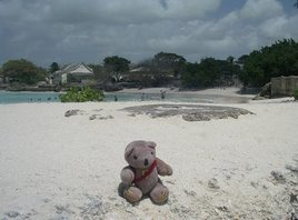 Bruno Bear on Barbados Beach
