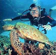 Marine Habitats/ Fish ...