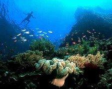 Sea Plantation