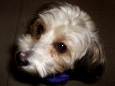 Koko - My Baby Girl!