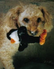 OUR FOSTER DOGS- 2006