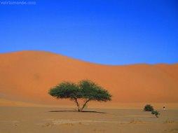 Traversée du nihilisme: L'arbre d'après