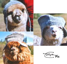 Alpacas In Alpaca Hats  - Official Ez Sez Mascots