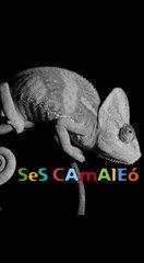 Ses Camaleo