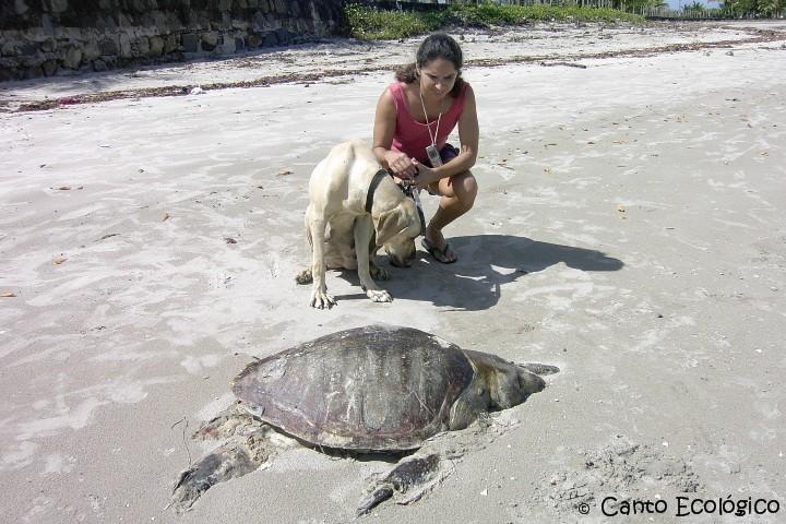 tartaruga marinha:um animal que vive mais de 100 anos....