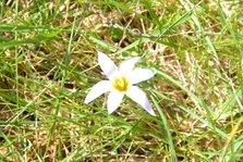 Flor entre hierbas