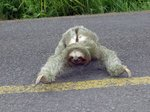 ------Hamblore------  (Canstralian Sloth)
