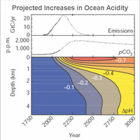 Projected increase in ocean acidity