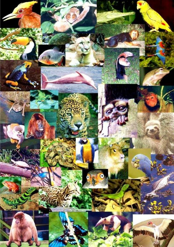 Amazon Animals - Biodiversity