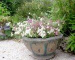 "<a href=""http://jardindecharente.blogspot.com"">Jardin de Charente Maritime</a>"