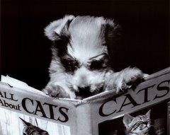 """""""Después del perro, el libro es el mejor amigo del hombre"""" (Groucho Marx)"""