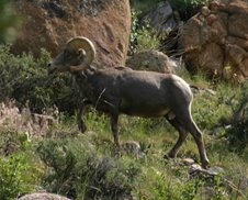 Big Horn Seep in Rocky Mountains
