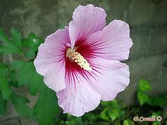 La Sencillez De Una Flor