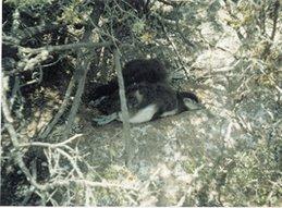 Pinguinos Descansando