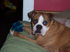 The Boxer rescue, Allister...