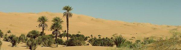 -Lo que más embellece al desierto es el pozo que oculta en algún sitio...
