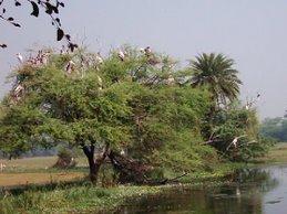 भरतपुर(Bharatpur)॰॰॰