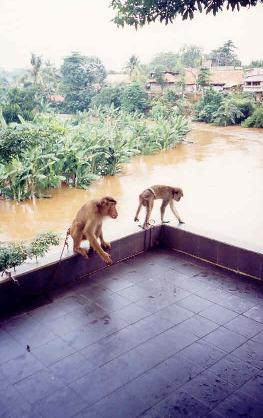 The Ciliwung River in mild flood from Blacky's Image Lounge, 2003