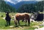Cavalli aveglinesi nell'alveo della dora ad Oulx (TO) maneggio il paggio di coppe.