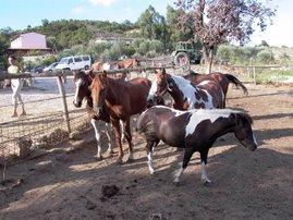 Alcuni cavalli nel maneggio montano Il paggio.