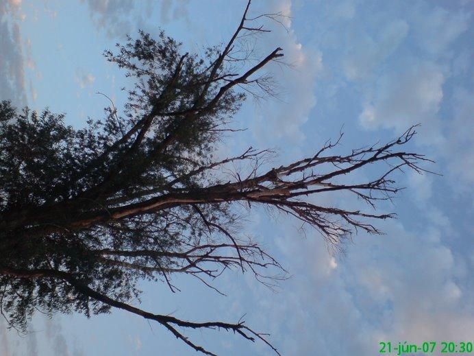 36fok-ban árnyékot adó fa