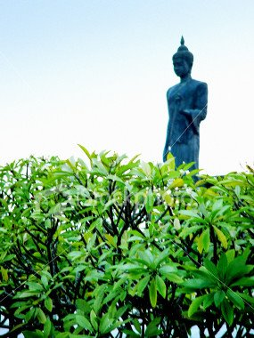 GREEN BUDDHA: