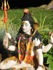 Green Shiva