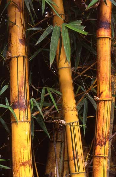 Bamboo.....Sustainable Product