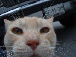 miau dijo el gato...
