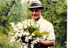 Joe Purdon with an armful of Showy Lady-Slipper Orchids several decades ago at the Purdon Fen.
