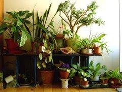 植物 2007.6.25