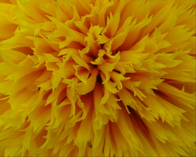 Yellow  flower, zoomed