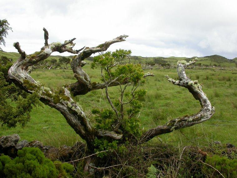 Habitats Cinegéticos nos Açores