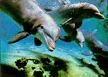 Dolphins in the Visayas