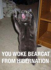 Bearcat!!!