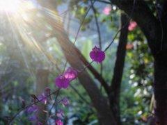 La Orquídea del Limonero