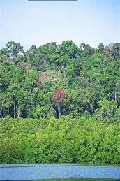Andaman Forests