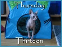 Thursday Thirteen