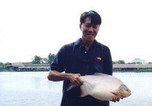 Pacu (Bung San Lan) Thailand