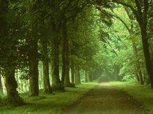 le chemin de la vie  est bordé des arbres que nous plantons