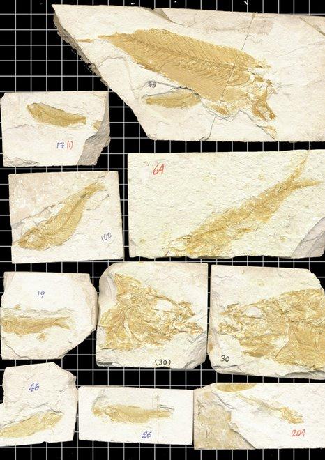 ...Y éstos son los fósiles