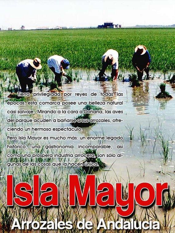 Isla Mayor, arrozales de Andalucía
