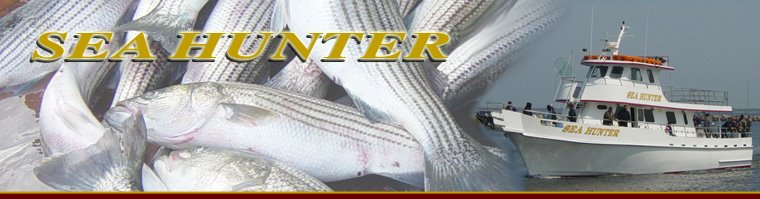 Sea Hunter Fishing Report