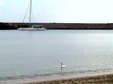 Cisne en el Mar
